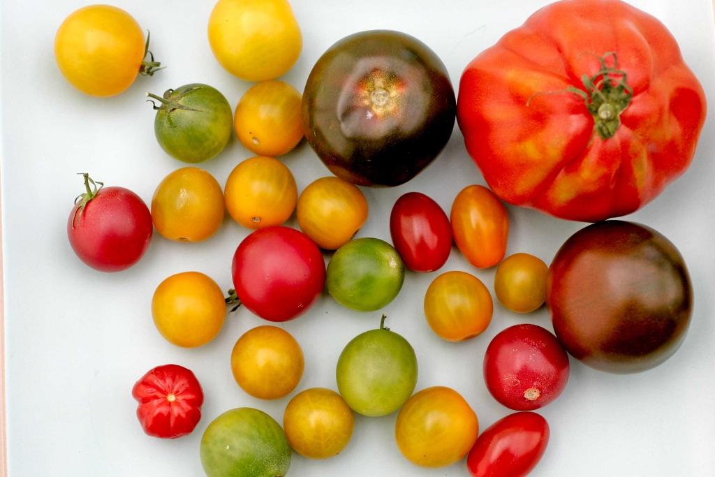 tomaten-