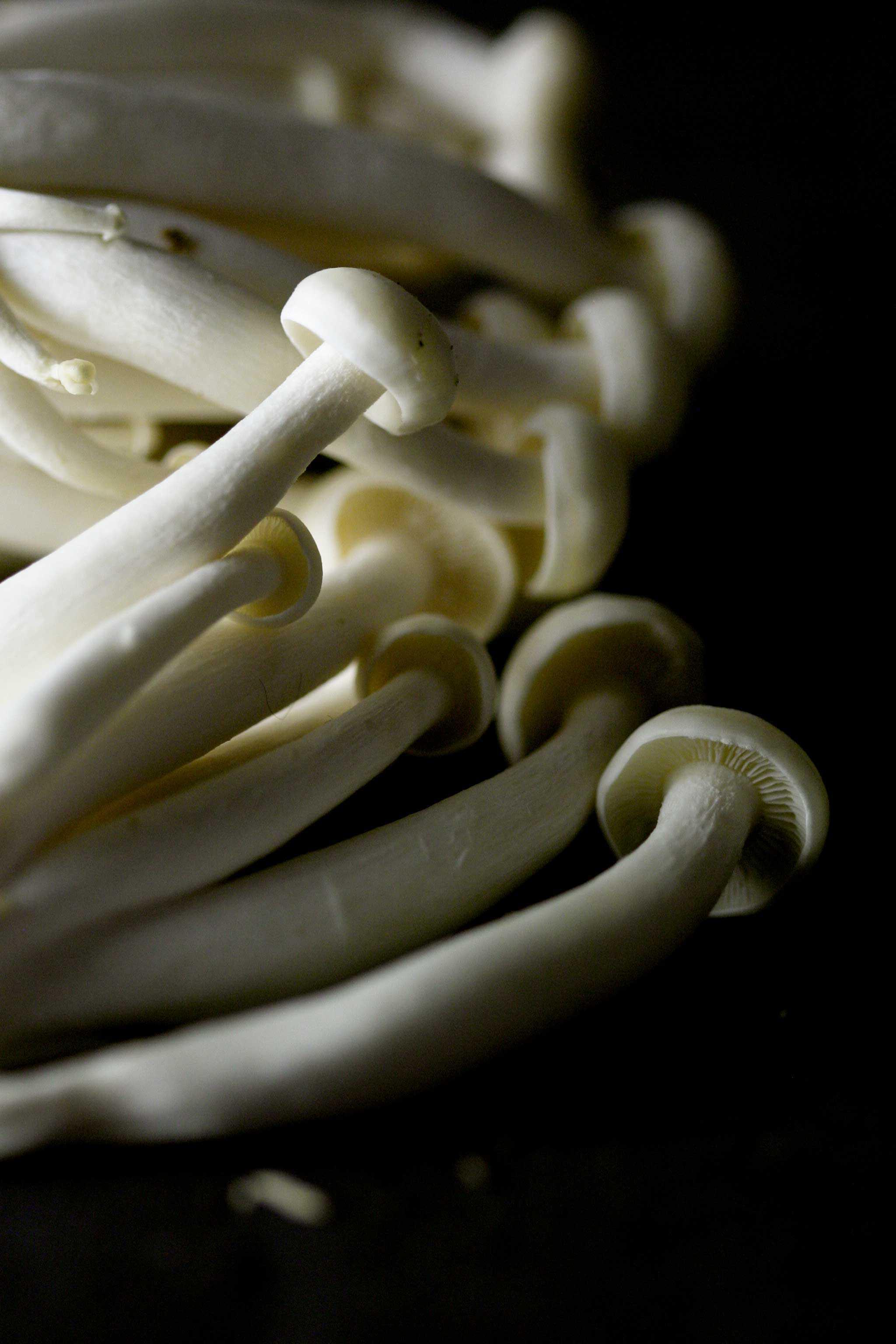 paddenstoelen-pompoentaartje